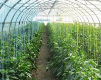 Polypropylene twine for greenhouses